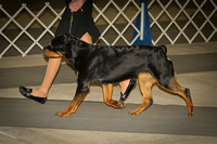 Rottweilers 3/3/12