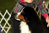 dbuckphoto-saw mill kc-bernese mtn dog-16