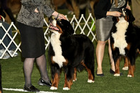 dbuckphoto-saw mill kc-bernese mtn dog-17