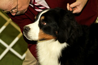 dbuckphoto-saw mill kc-bernese mtn dog-15