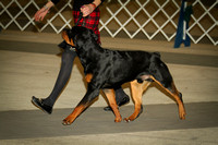 Rottweilers 3/4/12